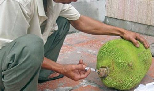 Cảnh báo ngộ độc từ các loại hoa quả trái vụ