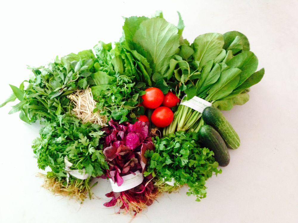Tác dụng của khí ozone: Khử sạch rau quả thực phẩm
